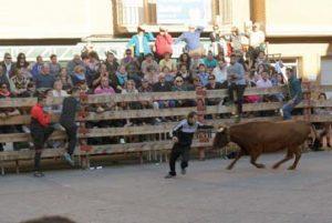 Un momento de la suelta de vacas en Buñuel. Fotografía: U: A.