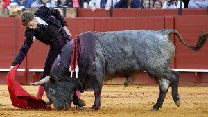 'Cobradiezmos', bravo toro de Victorinio Martín que fue indultado en la plaza de toros de Sevilla.