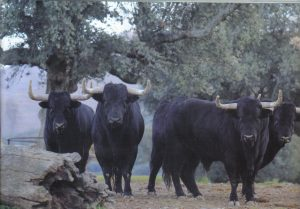 Toros de Puerto de San Lorenzo para 2017.