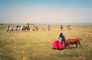 Dávila Miura, toreando una de las seis vacas en el tentadero a campo abierto celebrado en la finca Los Gallos.