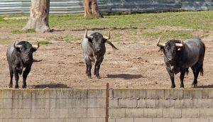 Toros para Pamplona 2