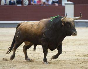 Hortelano, castaño, número 96, de 551 kilos, un gran toro de Fuente Ymbro.