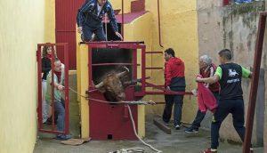 Toro con soga de Lodosa. Fotografía: Montxo A. G.