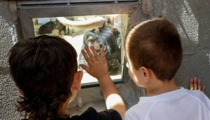 Dos chavales contemplan un toro en los corrales del Gas desde uno de los ventanucos.