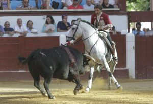 Donatelli. León. 24-VI-2017