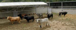 Los ocho toros desembarcados,