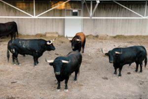Cuatro toros