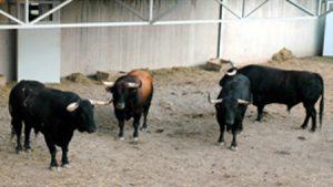 Cuatro toros. Otrra