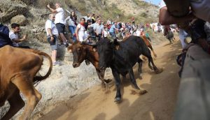 Las vacas guipuzcoanas han galopado a gran velocidad. Fotografía: Jesús Caso.