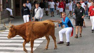 Un joven coleó a una de las vacas, lo que provocó las críticas de sus compañeros y de los pastores. Fotografía: Susana Esparza.