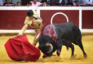 Toro de El Parralejo lidiado el pasado 13 de agosto en San Sebastián.