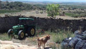 El novillo ha sido cercado en San Martín de Unx. Fotografía: Policía Foral.