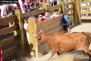 Una suelta de vacas en Mélida hace tres años.