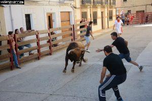 Una suelta de vacas en Carcastillo hace unos años.