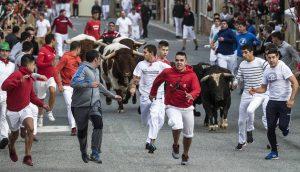 Los cuatro novillos, hermanados, encabezaron el encierro de ayer en Sangüesa. Fotografía: Luis Carmona.