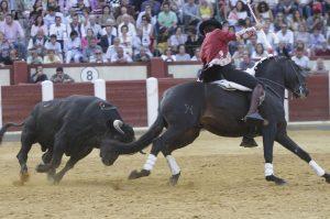 El caballero navarro, toreando con 'Alquimista', ayer en Valladolid.