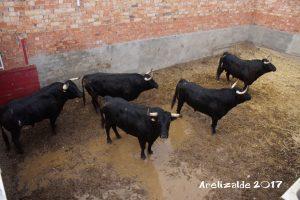Los toros de Alberto Mateos en los corrales.