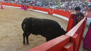 Esparraguero. El mejor toro