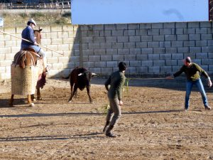 Filiberto, de espaldas, y Manu Rodríguez, con cañas, intentan sacar al novillo del peto.