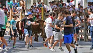 Una suelta de vaquillas en Burlada en 2016, todo ún éxito de participación y de público. Fotografía: Calleja.