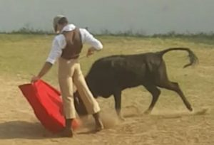 Javier Antón toreando al natural a una de las vacas de Rancho Grande.