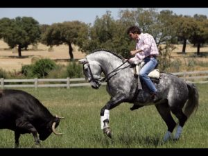 Sergio Galán toreando a caballo en su finca.