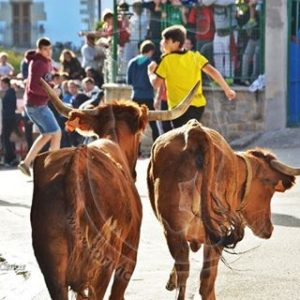 Una suelta de vacas en Zizur. Fotografía: Toriviciao.