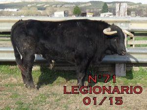 Legionario. 71. De enero de 2015