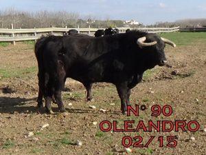 Oleandro. 90. Febrero de 2015