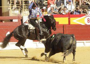El caballo 'Alquimista' en Alicante, siempre de salida.