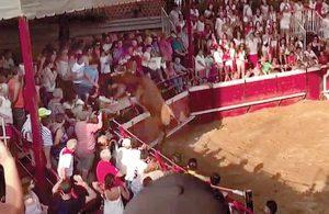 Momento en el que la vaca brava alcanza el tendido de la plaza de Cadreita. Fotografía: cedida.