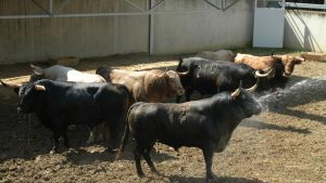 Los siete toros que han llegado al Gas, un encierro variado de capa.