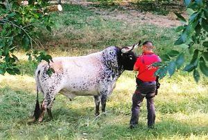 Un policía foral en Carcastillo junto al toro disecado. Fotografía: Policía Foral.