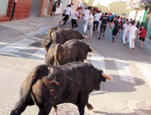 Los novillos de Pincha galoparon a gran velocidad por laa calles de Lodosa.