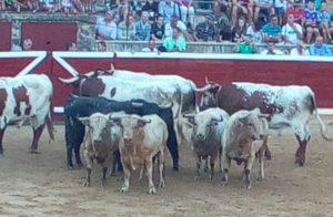 Los toros de Prieto de la Cal en el ruedo tafallés.