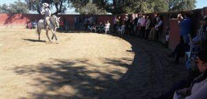 Leonardo Hernández realiza una exhibición de toreo a caballo en su finca ante el Club Taurino Moralo.