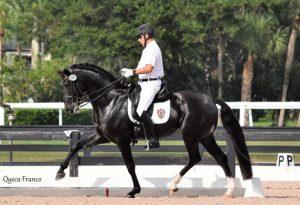 Imagen de 'Guru', el caballo premiado.