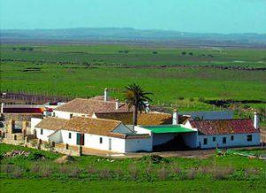 Panorámica de la finca gaditana La China, en Tarifa, 'cuartel general' de las reses bravas de La Palomsilla.