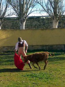 Antón torea con gusto una de las bravas becerras de Zahorí.