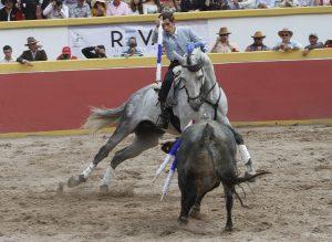 Gallo II. Atizapán de Zaragoza. 30-III-2019