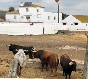 Cuatro de los 'cebada' reseñados para Pamplona. Fotografía: cedida.