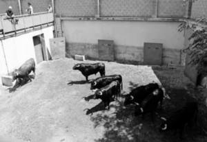 Los utreros del navarro Baigorri en los corrales tudelanos de la calle Frauca.
