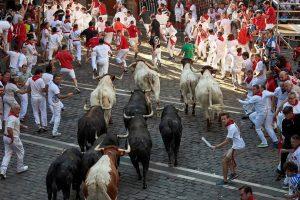 Una imagen repetida en los cuatro encierros celebrados: los mansos en cabeza de la manada.
