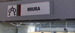 Los toros de Miura permanecen en los Corrales del Gas.