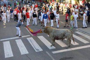 Los mozos y pastores han tidado del toro rezagado.