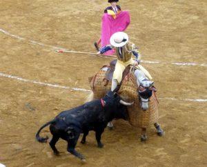 2017. El utrero 'Rascatripas', de Ganadería de Pincha, peleó con bravura en varas en la concurso de Saint Perdon.