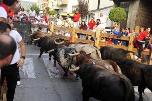 Los utreros de Dolores Aguirre galoparon agrupados durante todo el recorrido.