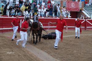 Vuelta al ruedo a 'Indio', sexto de Luis Albarrán, premiado como el toro más bravo de la feria. Fotografïa: Alberto Arelizalde.