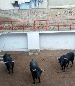 Los tres toros de Los Maños en un corral de plaza de toros de Corella.