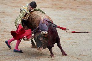 Toreo encimista de José Garrido ante el toro 'Tinajón', uno de los seis que forman la corrida ideal de 2019, según la revista 'Apluausos'.